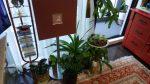 唯一の趣味「植物と暮らしたい」